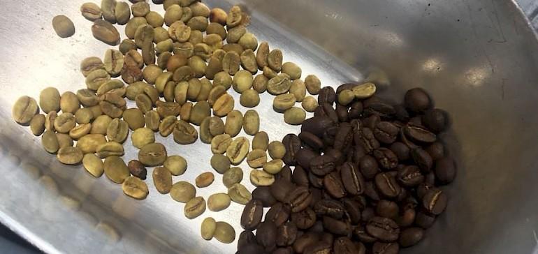 Kaffeebohnen in unterschiedlichen Verarbeitungszuständen