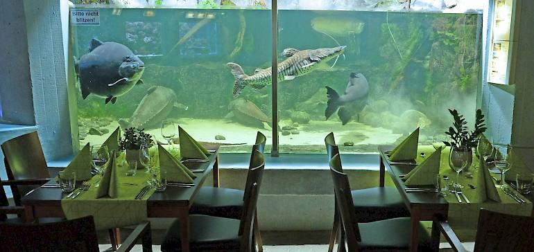 Mit Fischen speisen, statt Fische zu verspeisen. Warum nicht das nächste Kundeneevent im Aquarium des Allwetterzoos Münster veranstalten?