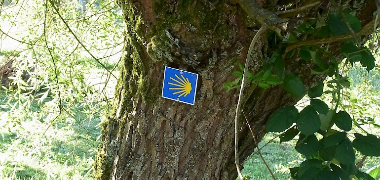 Die Pilgermuschel, der Wegweiser des Jakobswegs, befindet sich in Deutschland auch mal an einem Baum