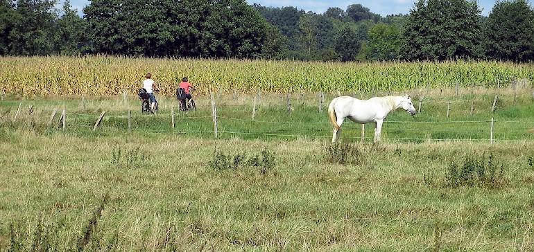 Weite, flache Ebenen erwarten Radfahrer im Münsterland